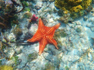 Beautiful photo of a starfish by Samantha Buonvino